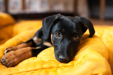 cute lonely black puppy dog