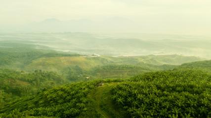 Landscape of green palm oil plantation hills