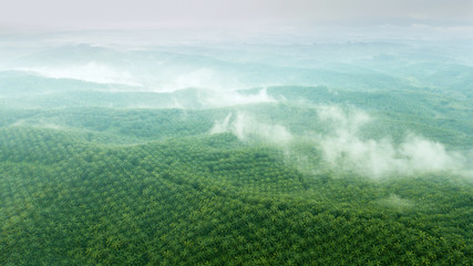 Aerial view of green palm oil plantation Wall mural