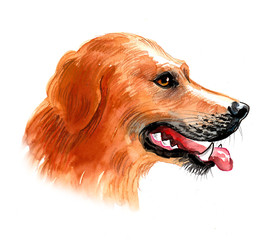 Watercolor sketch of a golden retriever dog