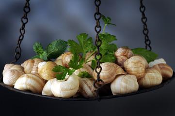 Σαλιγκάρι Chiocciole Escargot Lümaga Snail Melc Sciùs Chiocciola Babbaluscia حيوان Caragol de terra حلزون