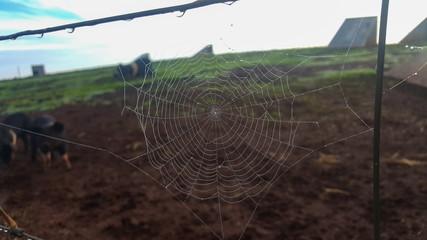 Spider web on a farm fence