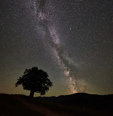 Silhouette of lonely high tree under wonderful starry night sky and Milky way in the mountains. Panorama