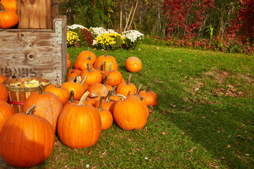 Outdoor shot. A rustic autumn still life. Fall harvest display..