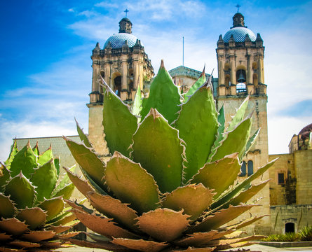 View to Oaxaca cathedral with agave plant Mexico