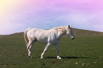 Romantico ritratto di uno splendido cavallo bianco al tramonto