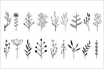 Vector set of hand drawn decorative herbs and flowers. Small twigs of different plants. Botanical icons
