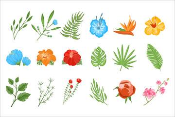 Flat vector set of tropical plants. Exotic flowers with bright petals and small branches with leaves. Botany theme. Natural elements