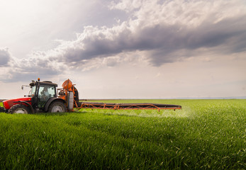 Wall Mural - Tractor spraying pesticides on wheat field with sprayer at spring