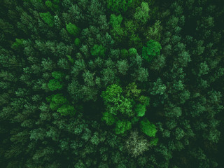 Fotobehang Bos aerial view over forest at spring