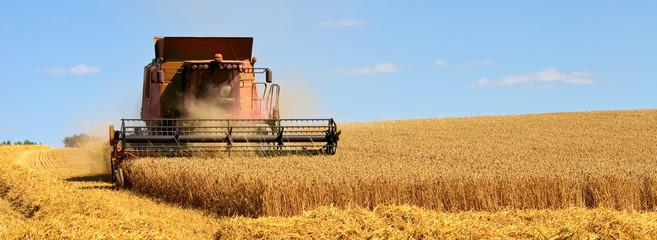 Récolte du blé dans les champs de France