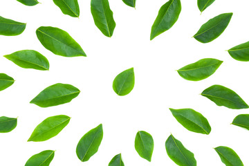flat lay green leaf isolated on white background for creative nature backdrop