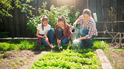 Two teenage girls weeding garden bed while young mother watering growing lettuce