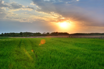 Green field and sunset glow