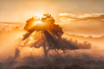 The tree of life with sunrays and a warm glow in Autumn