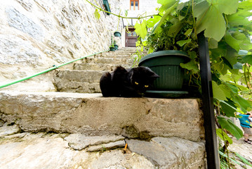 A black cat sits on a stone step