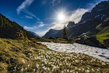 Frühling Schweizer Alpen