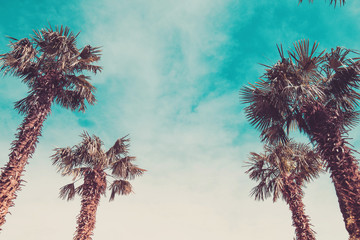 Palm trees in retro toning