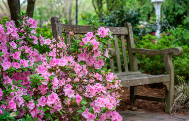 Spoed Fotobehang Azalea Azalea and Flower Garden with bench in Raleigh, North Carolina