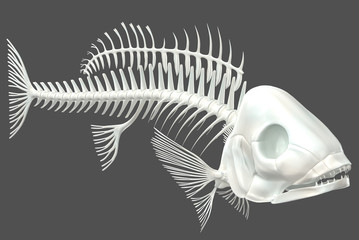3d render of a fish skeleton on a neutral grey background