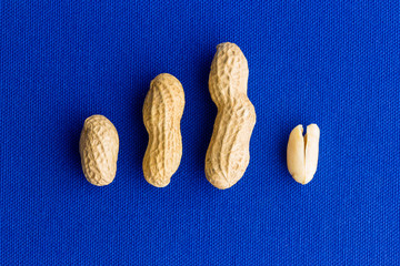 Peanut husk and nut evolution with copy space