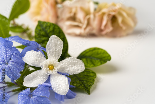 Small Purple And White Flowers Stock Photo And Royalty Free Images