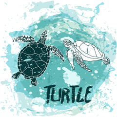 Turtles swim in the ocean