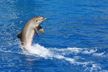 Dolphin exhibition in Valencia Aquarium