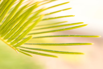 palm leaves with wind