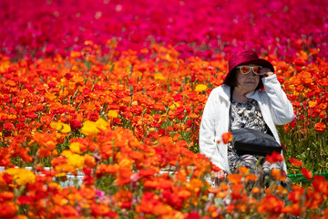 A woman adjusts her sunglasses as she has her picture taken amid thousands of ranunculus flowers at the Flower Fields in Carlsbad, California