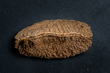 Brazil Nut Shell on Dark Background