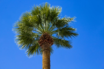 Single Palm Tree Against a Blue Sky