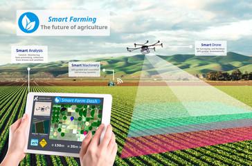 Smart farming, Hi-Tech Agriculture conceptual, Drone AI automatic, Agriculture technology