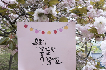 Beautiful Double Cherry Blossom Flowers with Calligraphy Words