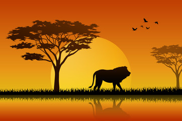 Silhouette  of lion at lake in savanah