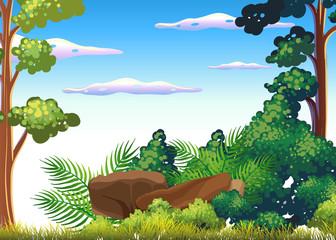 A Beautiful Tropical Rainforest Scene