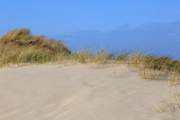 In denmarks dunes