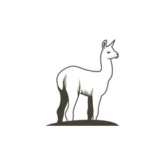 Llama - vector illustration