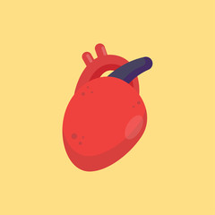 Human heart organ icon, healthy concept, vector illustration.