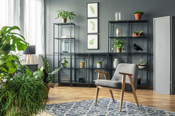 Gray armchair on patterned rug in dark and elegant living room interior with plants on a metal rack