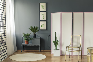 Elegant living room interior with plants on black cupboard next to a white and pink screen with gold chair and cactus at the front