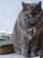 4241895 An old gray cat is sitting on an old family photo album