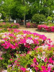 躑躅咲く公園