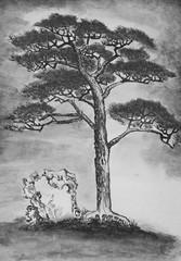 branchy pine tree