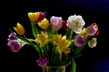 Tulips and daffodils in vase in front of black background