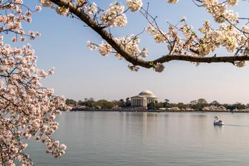Jefferson Memorial -- Cherry Blossoms 2
