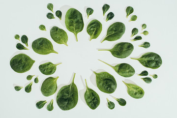 top view of beautiful fresh green leaves and copy space isolated on grey