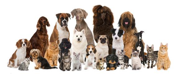 Gruppe verschiedener Hunde und Katzen isoliert auf weißem Grund