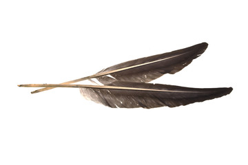 goose feather isolated on white background
