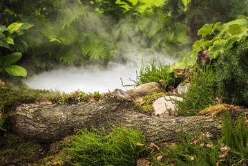 Forest pond smoke